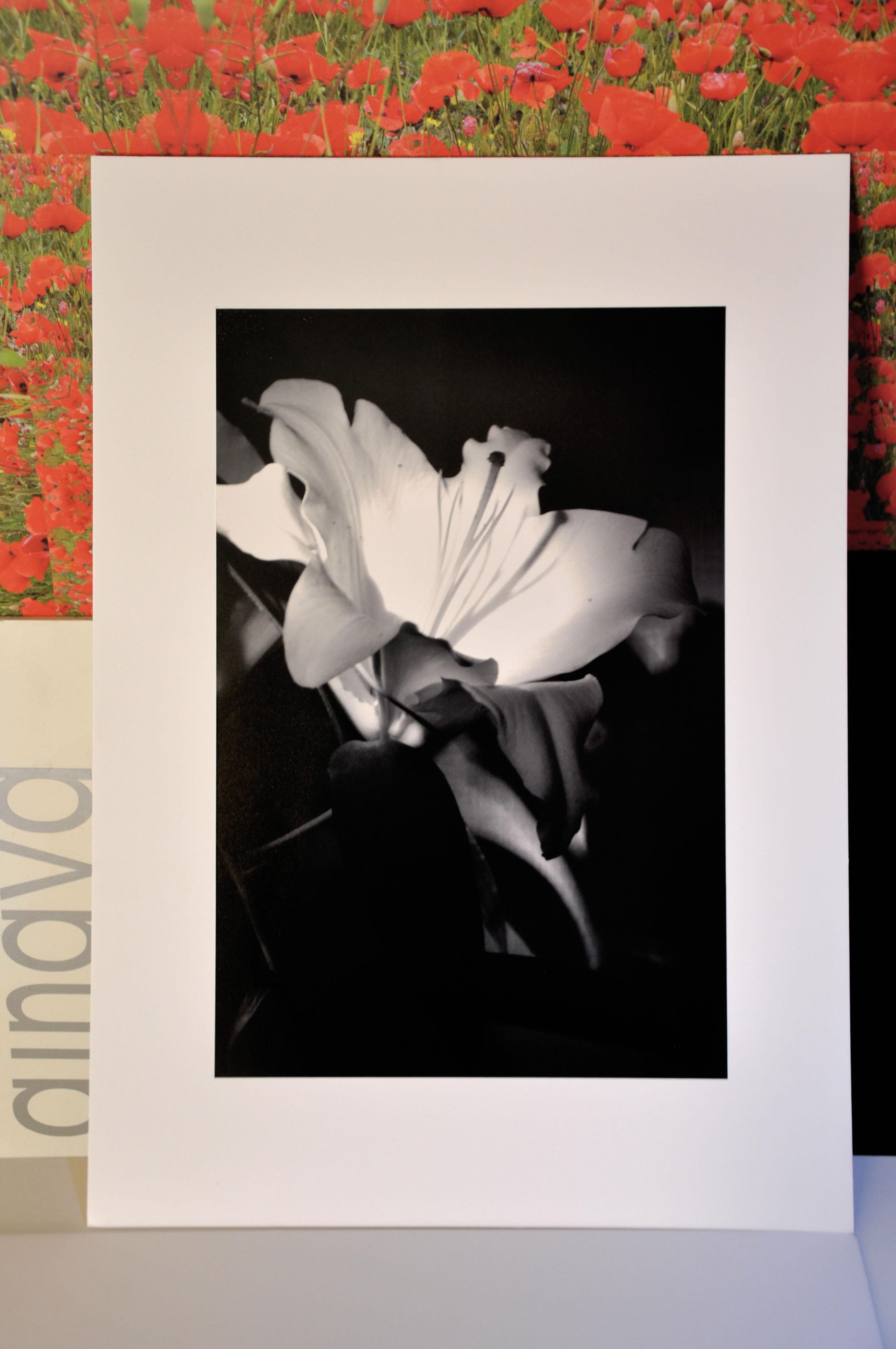 Alises Rozes Dizaina Studijas Foto kursantu diplomdarbu arhīvs